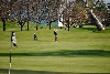 43rd Men's Golf at Wildcat Cup Photo